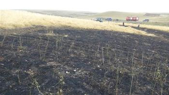 Kars'ta yıldırım düşen tarladaki ürün yandı